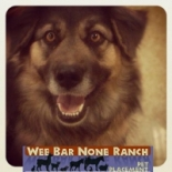 Wee+Bar+None+Ranch+Pet+Placement%2C+Apple+Valley%2C+California image