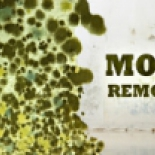 Miami+Mold+Testing+%26+Inspection%2C+Hialeah%2C+Florida image