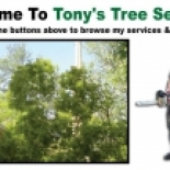 Tony%27s+Tree+Service%2C+Hilton+Head+Island%2C+South+Carolina image