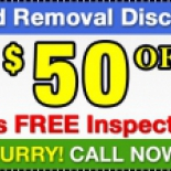 Mold+Removal+Experts+Montreal%2C+Montreal%2C+Quebec image