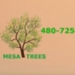 Mesa+Trees%2C+Mesa%2C+Arizona image