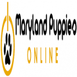 Maryland+Puppies+Online%2C+Torrance%2C+California image