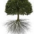 Eagle River Tree Service Icon