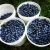 Echo Springs Blueberry Farm Icon
