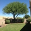 Arizona-treetrimming Small Profile Image
