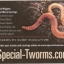 specialt-worms image